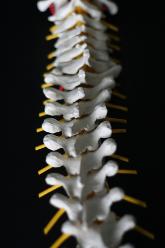 Sarasota and Bradenton Spine Care & Spine Surgery